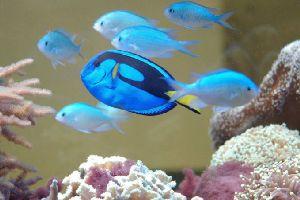 Akvariumų įrengimo ir priežiūros paslaugos