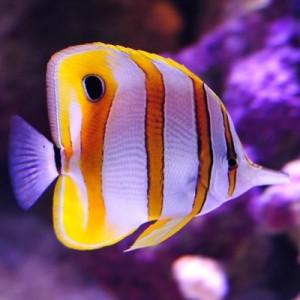 Nauja 21.07.01 jūrinių žuvų ir koralų siunta