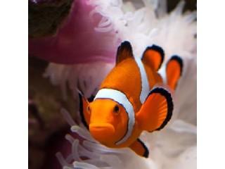 Nauja 21.02.26 jūrinių žuvų ir koralų siunta