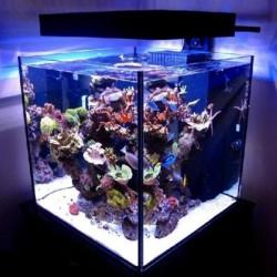 Jūrinis akvariumas tai ne fantastika