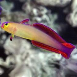 Nauja 21.09.27 jūrinių žuvų ir koralų siunta