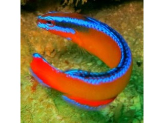 Nauja 21.02.01 jūrinių žuvų ir koralų siunta