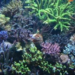 Redokso potencialas rifiniam akvariume