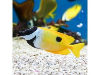 Nauja 21.10.07 jūrinių žuvų ir koralų siunta