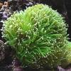 Nauja 20.09.15 jūrinių žuvų ir koralų siunta