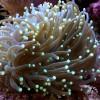 Nauja 20.11.17 jūrinių žuvų ir koralų siunta