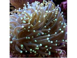 Nauja 20-11-17 jūrinių žuvų ir koralų siunta
