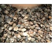 Shells / Muschelschalen 2500g